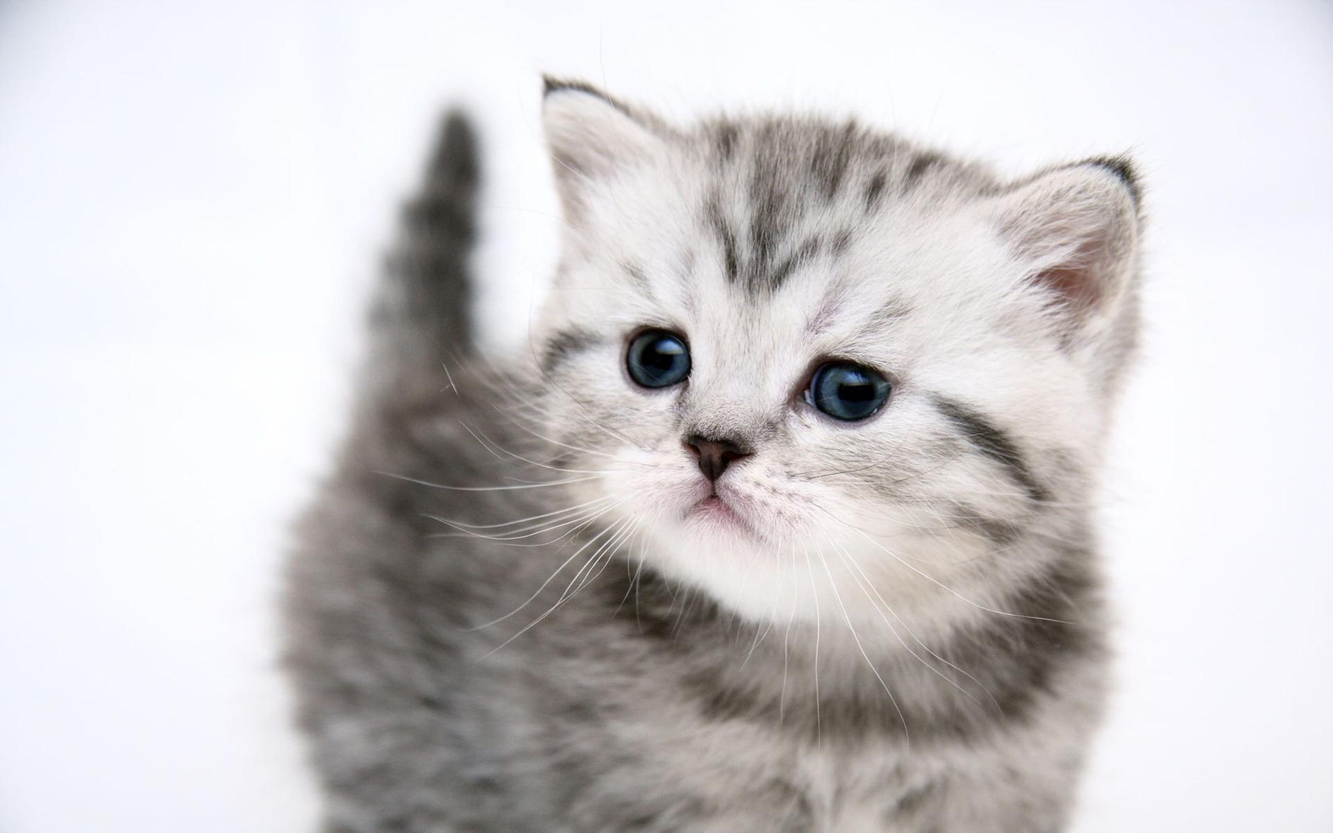 Назвать кота люцифера